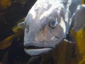 945魚 (2)