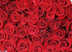 百万本のバラ